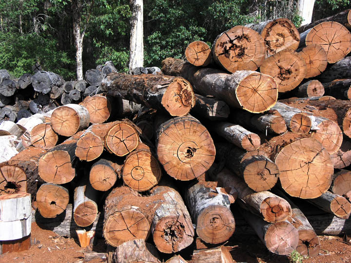 BC lumber producers welcome Canada's appeal to the WTO